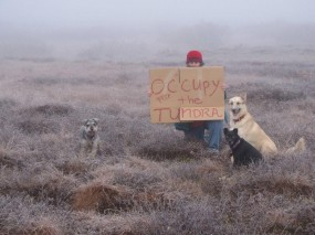 occupytundra1